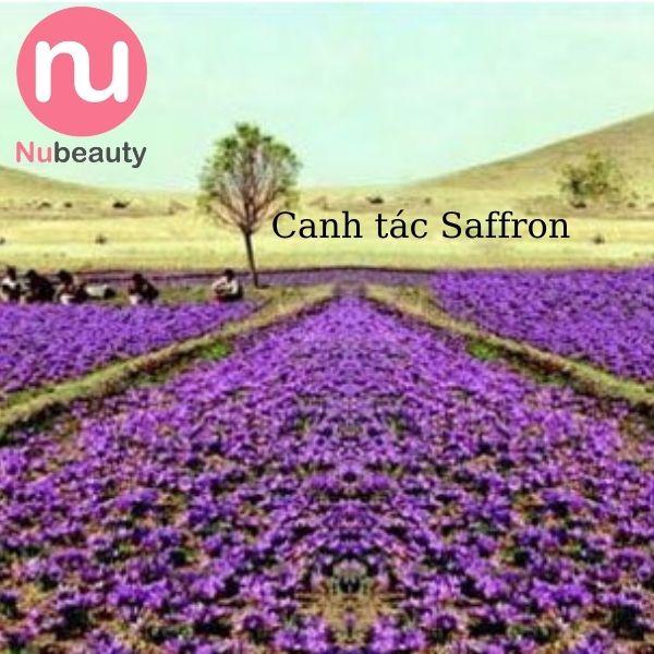 saffron-co-tot-khong-nubeauty-1